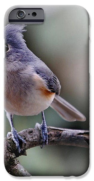 SRING TIME TITMOUSE iPhone Case by Skip Willits