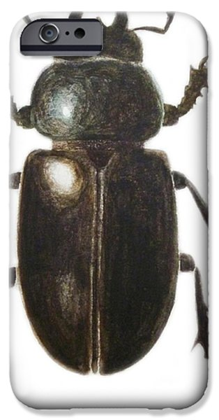Biting iPhone Cases - Stag Beetle iPhone Case by Ele Grafton