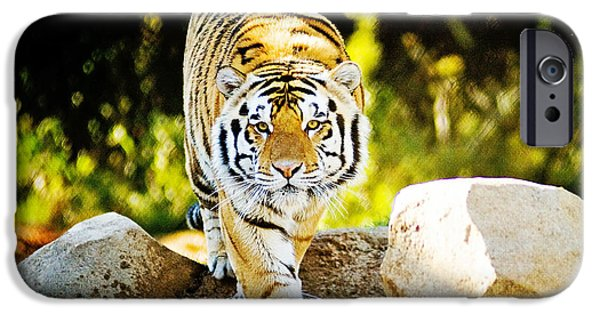 Mike The Tiger iPhone Cases - Stalker iPhone Case by Scott Pellegrin