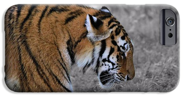 The Tiger iPhone Cases - Stalking Tiger iPhone Case by Dan Sproul