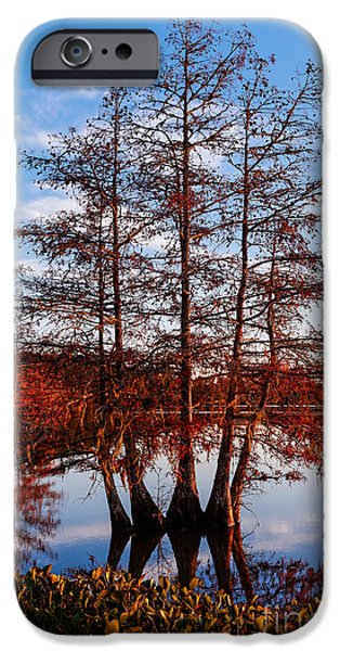National Preserves iPhone Cases - Stand of Bald Cypress trees at BA Steinhagen Lake in Martin Dies Jr State Park - Jasper East Texas iPhone Case by Silvio Ligutti