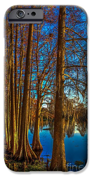 Cypress Trees iPhone Cases - Stand Tall iPhone Case by Marvin Spates