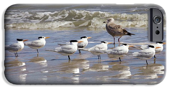 Sea Birds iPhone Cases - Stand to attention iPhone Case by TN Fairey