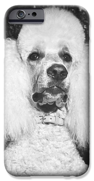 Animal Portraiture iPhone Cases - Standard Poodle iPhone Case by ME Browning