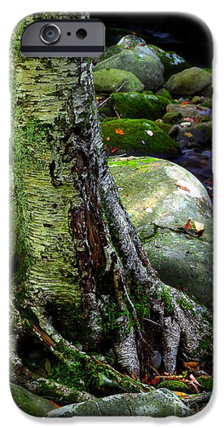 Tree Roots iPhone Cases - Standing Along The Stream iPhone Case by Michael Eingle