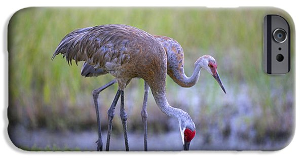 Baby Bird iPhone Cases - Standing Behind Mom iPhone Case by Carol Groenen