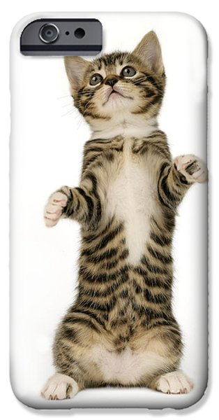 Greg Cuddiford Digital iPhone Cases - Standing Cat CK305 iPhone Case by Greg Cuddiford