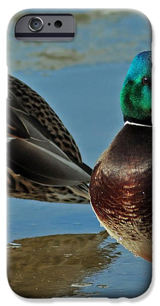 Standing Guard  iPhone Case by Eric Rundle