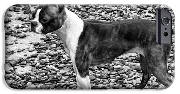 Canine Greeting Cards Digital Art iPhone Cases - Standing Proud - Boston Terrier iPhone Case by Jordan Blackstone