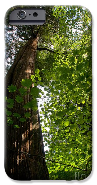 Stanley Park iPhone Cases - Stanley Park Trees 10 iPhone Case by Terry Elniski