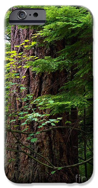 Stanley Park iPhone Cases - Stanley Park Trees 25 iPhone Case by Terry Elniski