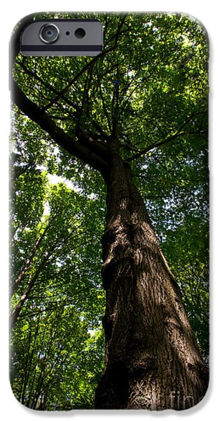 Stanley Park iPhone Cases - Stanley Park Trees 8 iPhone Case by Terry Elniski