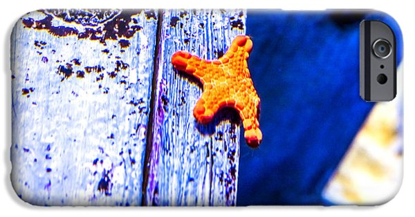 Cut-outs iPhone Cases - Star Fish iPhone Case by Jijo George