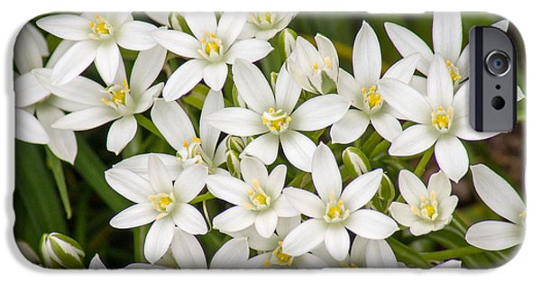 Star Of Bethlehem iPhone Cases - Star of Bethlehem iPhone Case by Bill Pevlor