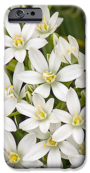 Star of Bethlehem iPhone Case by Bill Pevlor