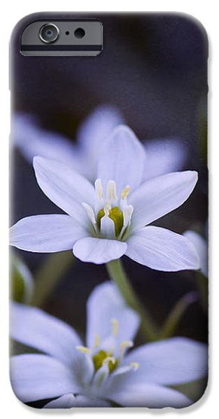 Star of Bethlehem - VanDusen Botanical Garden iPhone Case by May L