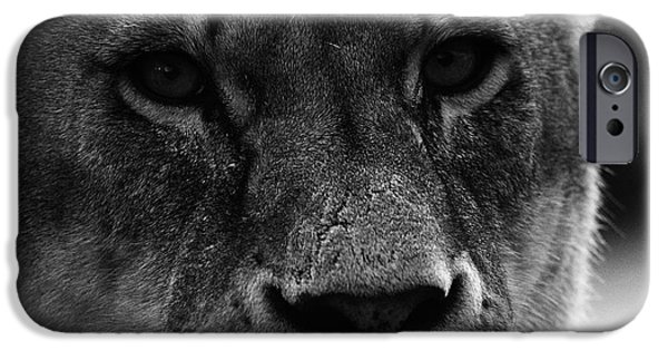 Animals Photographs iPhone Cases - Stare of a Lion iPhone Case by Martin Newman