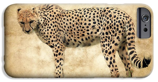 Fury iPhone Cases - Stare Of The Cheetah iPhone Case by Athena Mckinzie