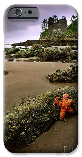 Solitude Photographs iPhone Cases - Starfish on the Rocks iPhone Case by Inge Johnsson