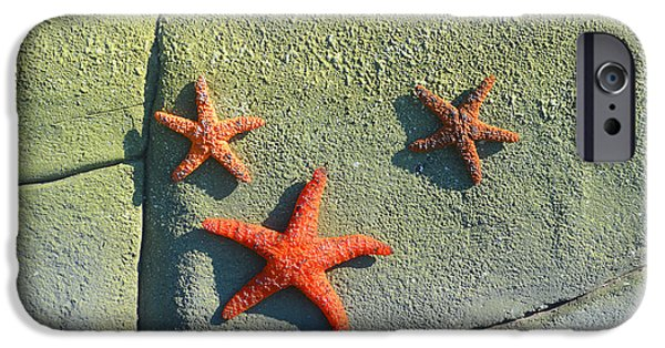 Marine iPhone Cases - Starfish on the Rocks iPhone Case by Luther   Fine Art