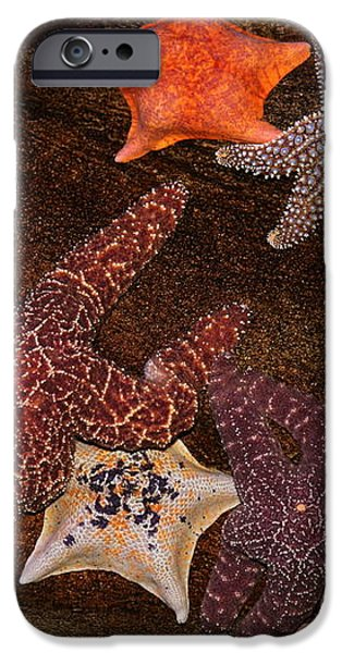 Starfish Variety 5D24133 iPhone Case by Wingsdomain Art and Photography