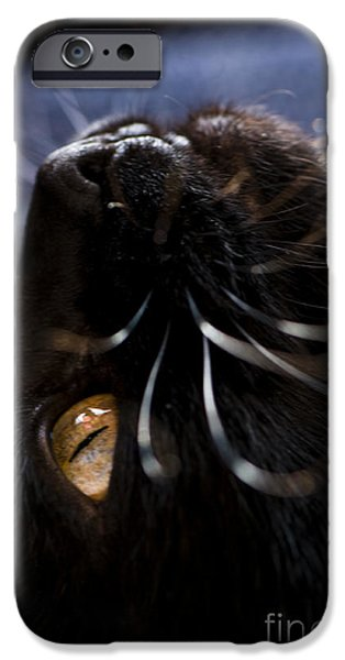 Green Witch iPhone Cases - Staring at the Ceiling iPhone Case by Anne Gilbert