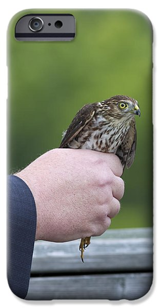 Hawk Art Print iPhone Cases - Staring Back iPhone Case by Phill  Doherty