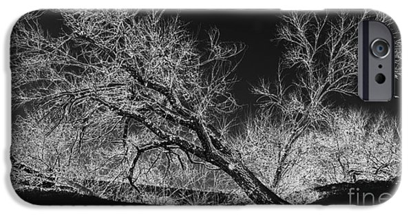 Snow Scene Digital iPhone Cases - Starkly iPhone Case by Betty LaRue