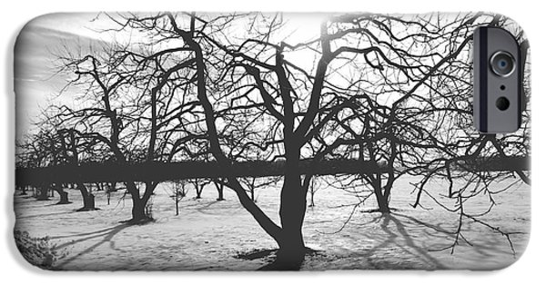 Winterscape iPhone Cases - Starkweather or not iPhone Case by Trish Hale