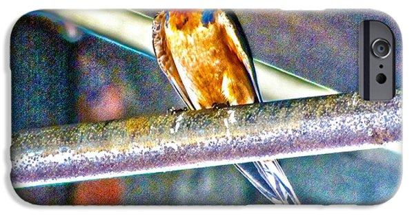 Barn Swallow iPhone Cases - Barn Swallow iPhone Case by Annie Zeno