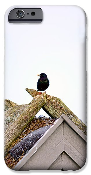 Cut-outs Mixed Media iPhone Cases - Starling on old house iPhone Case by Toppart Sweden