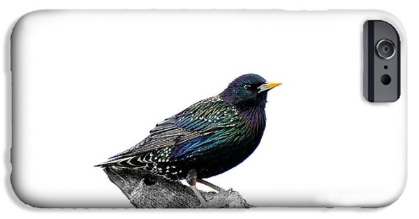 Cut-outs Mixed Media iPhone Cases - Starling on roof iPhone Case by Toppart Sweden