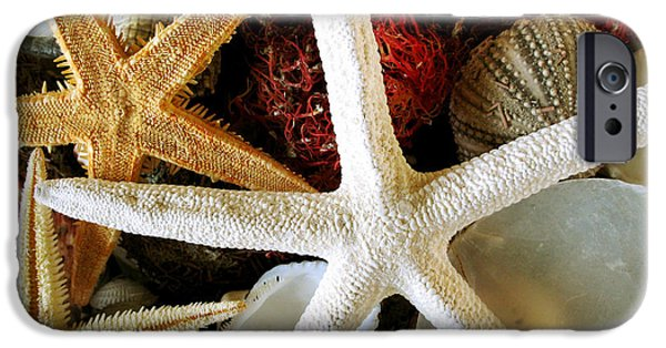 Starfish iPhone Cases - Stars of the Sea iPhone Case by Colleen Kammerer
