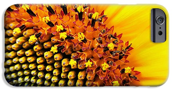 Close Up Floral iPhone Cases - Stars of The Sun iPhone Case by Marianna Mills