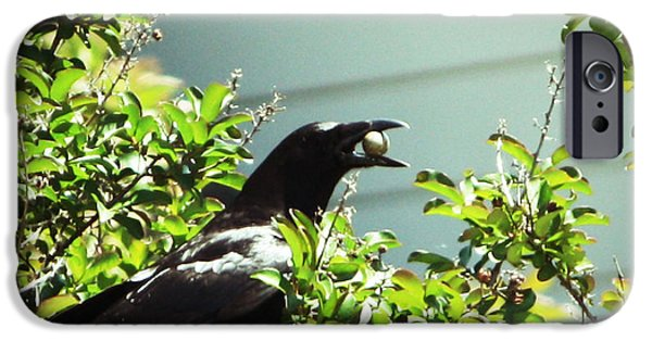 Crows Pyrography iPhone Cases - Stealer iPhone Case by Api Leuridan