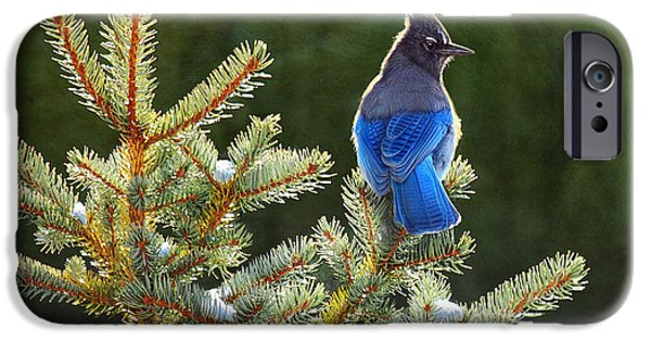 Recently Sold -  - Stellar iPhone Cases - Stellar Jay On Spruce iPhone Case by R christopher Vest