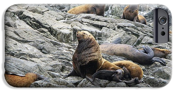 Stellar Pyrography iPhone Cases - Stellar Sea Lion iPhone Case by Shoal Hollingsworth