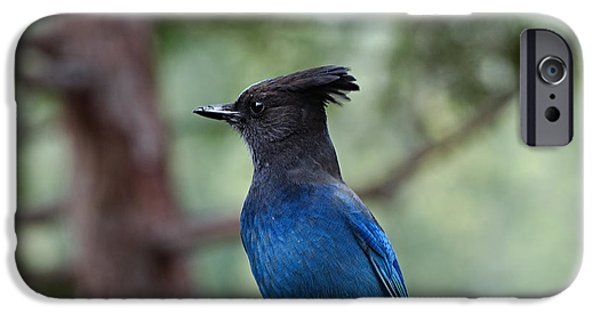Stellar iPhone Cases - Stellars Jay iPhone Case by See My  Photos