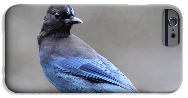 Jay iPhone Cases - Stellers Jay iPhone Case by Angie Vogel