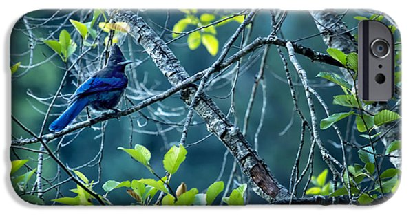 Stellar iPhone Cases - Stellers Jay in a Tree iPhone Case by Belinda Greb