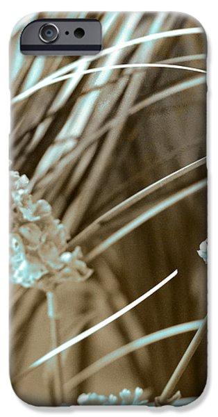 Stems II iPhone Case by Yanni Theodorou