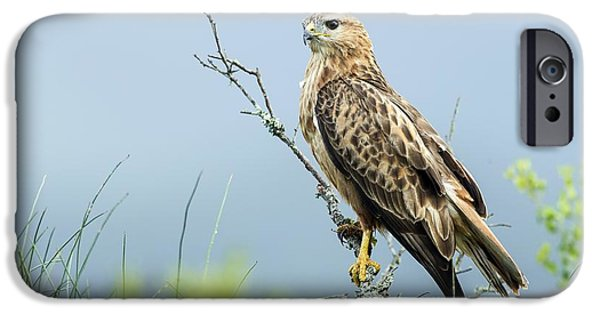 Addo iPhone Cases - Steppe Buzzard iPhone Case by Peter Chadwick