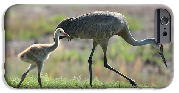 Baby Bird iPhone Cases - Stepping Out with My Baby iPhone Case by Carol Groenen