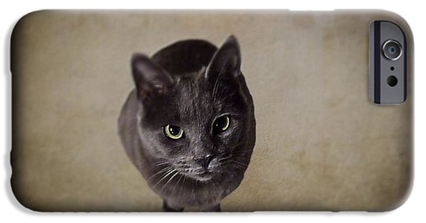 Innocence iPhone Cases - Sterling the Cat iPhone Case by David Dehner