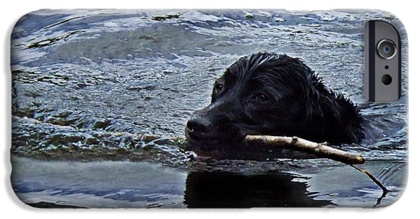 Mixed Labrador Retriever iPhone Cases - Stick Retrieval iPhone Case by Joy Nichols