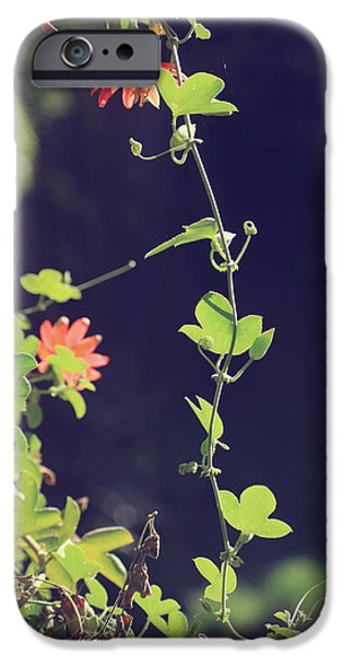Vine Leaves iPhone Cases - Still Holding On iPhone Case by Laurie Search