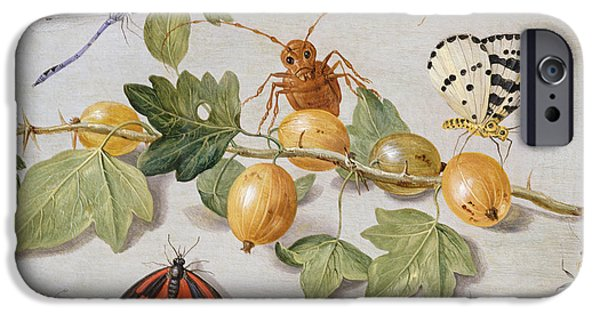 Nature Study Paintings iPhone Cases - Still life of branch of gooseberries iPhone Case by Jan Van Kessel