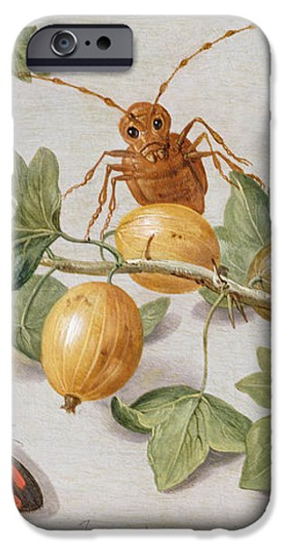 Still life of branch of gooseberries iPhone Case by Jan Van Kessel