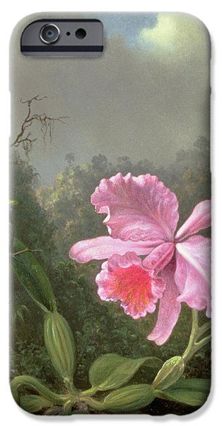 Still Life with an Orchid and a Pair of Hummingbirds iPhone Case by Martin Johnson Heade