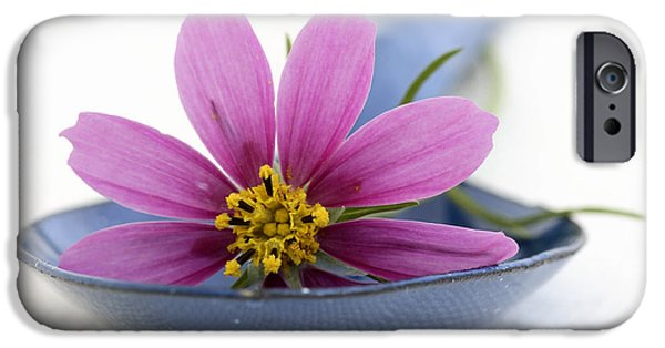 Pharmacy iPhone Cases - Still Life With Pink Flower On A Blue Spoon iPhone Case by Frank Tschakert